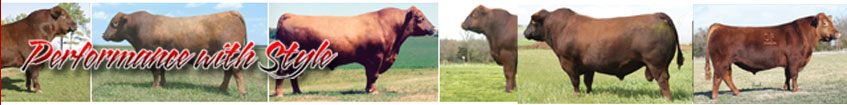Ludvigson Stock Farms - Red Angus Cattle