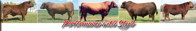 Ludvigson Stock Farms Red Angus Cattle